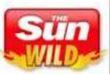 Sun-bingo-WILD-bonus